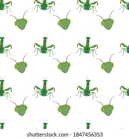 Beautiful pattern of the mantid. Suitable for decorating things.