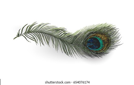 Beautiful peacock feather on white background, Hand Drawn Sketch Vector illustration.