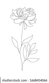 Beautiful peony flower. Line art concept design. Continuous line drawing. Stylized flower symbol. Vector illustration