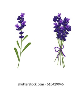 A beautiful picture of lavender in a bouquet.Vector illustration