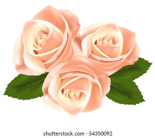 Beautiful pink flowers with leaves isolated on the white background. Photo-realistic vector illustration.