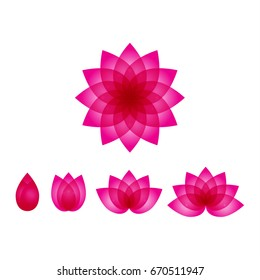 beautiful pink lotus vector set, lotus icons, water lily flowers illustration