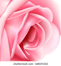 Beautiful Pink Rose On A White Background Vector Illustration