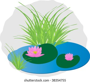Beautiful pink water lily on the lake.Vector.