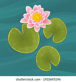 Beautiful pink waterlily or lotus flower in pond. Vector illustration.