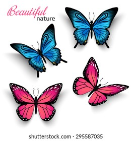 Beautiful realistic butterfly with shadows isolated on white. Vector illustration of tropical blue and red butterflies. Realistic nature butterfly for graphic decoration