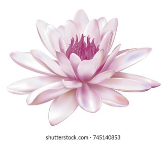 A beautiful realistic illustration of a light pink lily or lotus and lily isolated on white background close up. Photo-realistic mesh vector illustration.