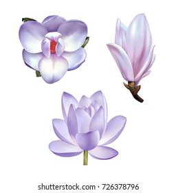 A beautiful realistic illustration of a pastel pink purple lotus lily, a magnolia in front view and a bud, Set of flowers isolated on white background. Photo-realistic mesh vector illustration