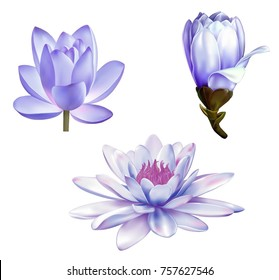 A beautiful realistic illustration of a pastel purple lotus lily, a magnolia in front view and a bud, Set of flowers isolated on white background. Photo-realistic mesh vector illustration
