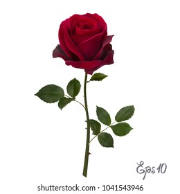 Beautiful red rose Isolated on white background. Photo-realistic gradient mesh vector illustration.