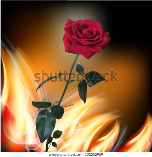Beautiful red rose. Vector realistic illustration on flame background.