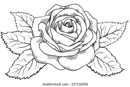 Rose outline images stock photos vectors shutterstock beautiful rose in the style of black and white engraving mightylinksfo