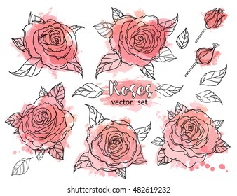 30bb919bd0351 Beautiful roses set drawing isolated on white. Hand drawn vector highly  detailed line art illustration