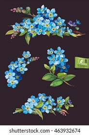 Beautiful set of blossoming Blue Forget-me-not flowers, eps8