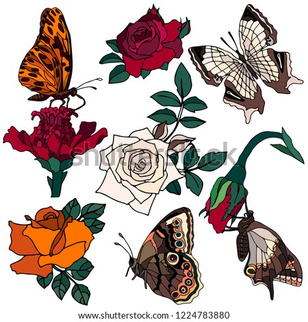 Beautiful Set Flowers Roses Butterfly Vector Stock Vector Royalty