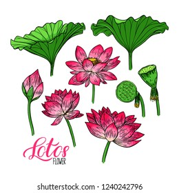 Beautiful set of lotus flower and leaves. Hand-drawn illustration