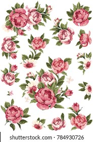 Beautiful set of rose flowers isolated on white Vector Illustration