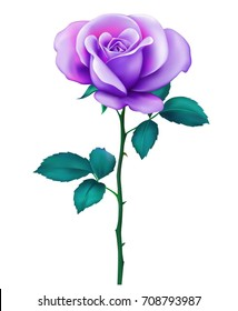 Beautiful sexy purple rose with stem and leaves Isolated on white background. Photo-realistic gradient mesh vector illustration.