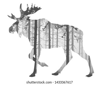 Beautiful silhouette of a running moose for your design. Inside is a pine forest. Black white isolated object. Vector illustration