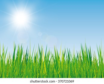 beautiful spring background with green grass texture, blue sky and bright sun