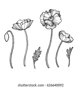 Beautiful summer flowers poppies on a white background. Isolated object-style flat. Fine drawing of Botanical drawing handmade. Pilmeny style, unique. Vector illustration. Embroidery.