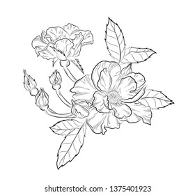 Beautiful and tender sketches of flowers