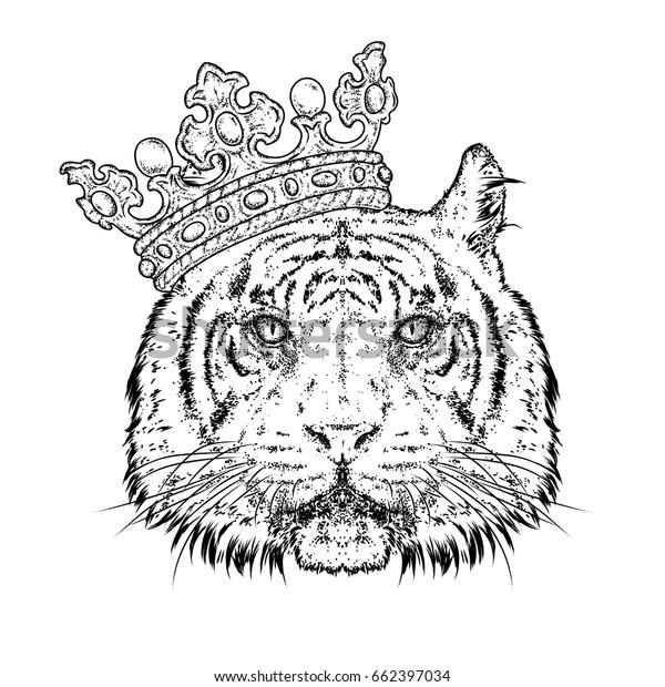 White Tiger Poster Wild Beautiful Animal Artwork Picture Blue Black Photo Print