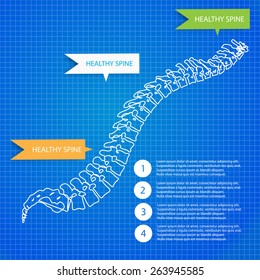 Beautiful timeline infographic medic spine human on the blueprint background. Clean and elegant style