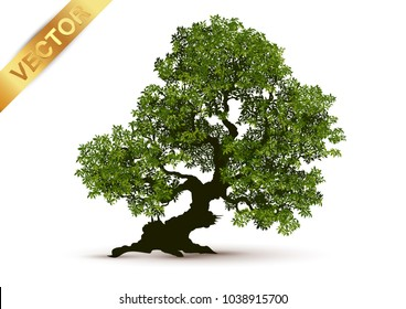 Beautiful tree on a white background.