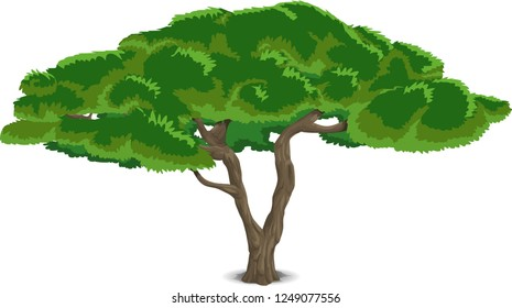Beautiful tree on a white background, trees illustrations. Can be used to illustrate any nature or healthy lifestyle topic, illustration with high pines in fir trees forest, oak tree