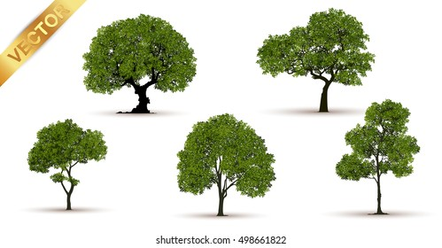 Beautiful tree on a white background