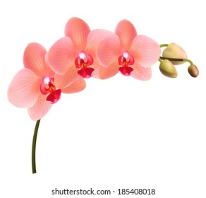 Beautiful tropical branch of peach pink orchid phalaenopsis isolated on a white background. Red flowers detailed vector design illustration.