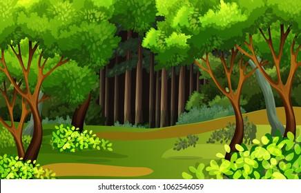 A Beautiful Tropical Rainforest Scene illustration