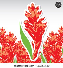 A beautiful tropical red ginger flower, Vector