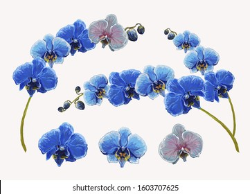 Beautiful tropical vintage blue orchid flower set floral background. Exotic jungle wallpaper.