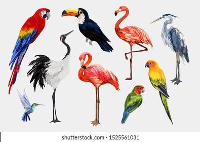 Beautiful tropical vintage exotic tropical birds clip art. Crane, toucan, flamingo, parrot, hummingbird, ara, heron wildlife print. Isolated on white background.