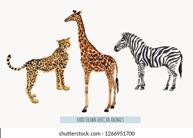 Beautiful tropical vintage illustration background with zebra, giraffe, leopard. Isolated on white background.