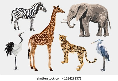 Beautiful tropical vintage illustration clip art background with zebra, giraffe, leopard, japanese crane, elephant, heron. Isolated on white background.