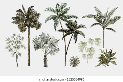 Beautiful tropical vintage plants. Floral clip art. Exotic botanical print. Isolated on white background