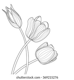 Beautiful tulip flowers line illustration. Vector abstract black and white floral background with place for text. Spring background, greeting card template.