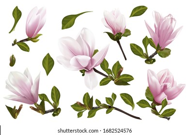 Beautiful twig blooming Magnolia. Vector illustration. EPS 10