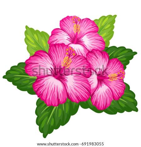Beautiful Vector Bouquet Tropical Hibiscus Flower Stock Vector