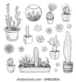 Beautiful vector collection of sketches houseplants. Hand drawings cacti and succulents isolated on white background