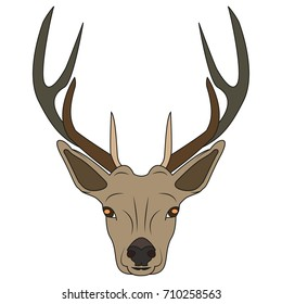 Beautiful vector Deer