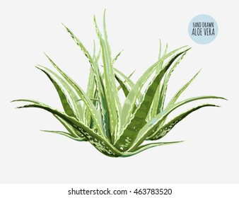 Beautiful vector floral illustration background with aloe vera. Perfect for wallpapers, web page backgrounds, surface textures, textile