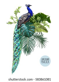 Beautiful vector floral illustration background with peacock, tropical spring leaves, branches. Chinese style, isolated object.