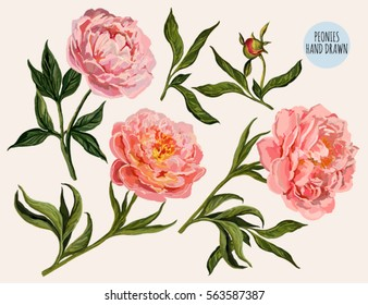 Beautiful vector floral summer illustration background with hand drawn peony flowers. Perfect for wallpapers, web page backgrounds, surface textures, textile.
