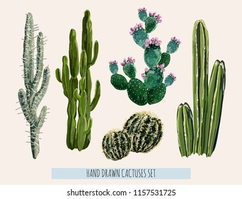 Beautiful vector floral summer tropical illustration  background with cactuses, succulents Perfect for wallpapers, web page backgrounds, surface textures, textile. Isolated on white background.