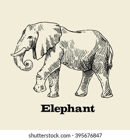 Beautiful vector hand drawn elephant for your design