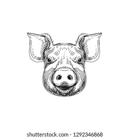Beautiful vector hand drawn meat products Illustration. Detailed retro style Pig head image. Vintage sketch element for labels, packaging and cards design. Modern background.